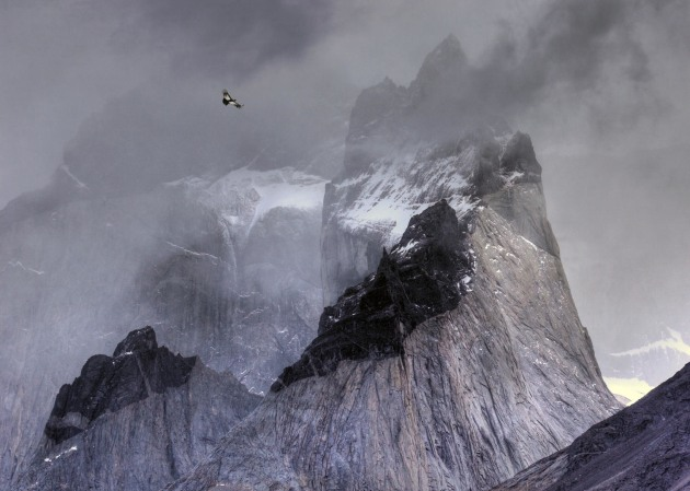 2017 Bird Photographer of the Year Awards. Winner, Birds in the Environment. 'Condor over mountains' by Ben Hall