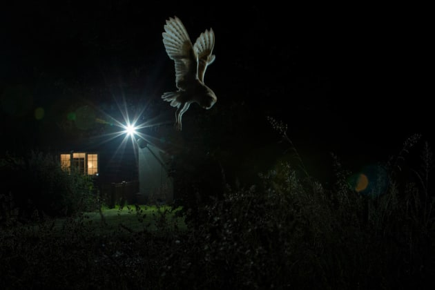 2017 Bird Photographer of the Year Awards. Winner, Birds in the Garden. 'Hovering Barn Owl' by Jamie Hall