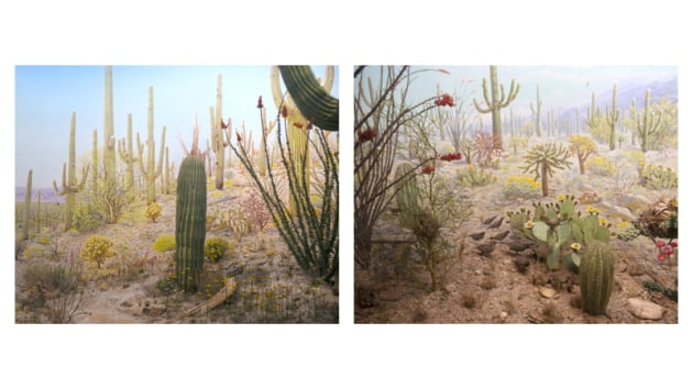 © Itamar Freed. 2nd Place - Landscape Prize. Arizona diptych. This photograph is of a diorama: a model of the Arizona permanently installed in New York. The diorama's original intent was to inspire environmentalism and visually preserve a unique landscape. I reinterpreted the scene; three-dimensional taxidermied birds and flora, and a two-dimensional painted mural in the background to produce a picture-perfect landscape, alerting the viewer to the disappearance of natural landscape and the dissolving of two seemingly separate categories - nature and culture.