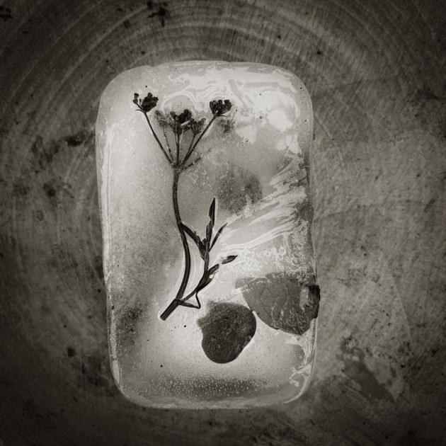 © Jennie Groom. 3rd Place - Mobile Prize. This photo is all about nature, textures and ice, the real stuff.