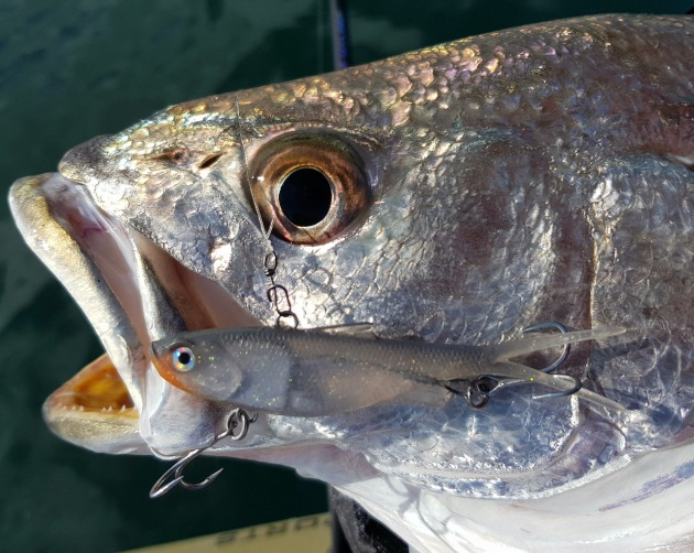 high-quality-hook-and-split-rings-ensure-the-85mm-samaki-vibelicious-in-the-new-ghost-bait-is-jewfish-ready.-2.jpg