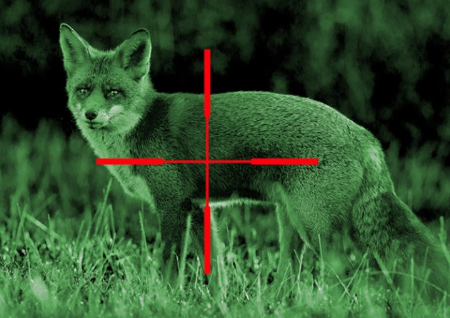 Night Vision image of fox about to put his cue in the rack.