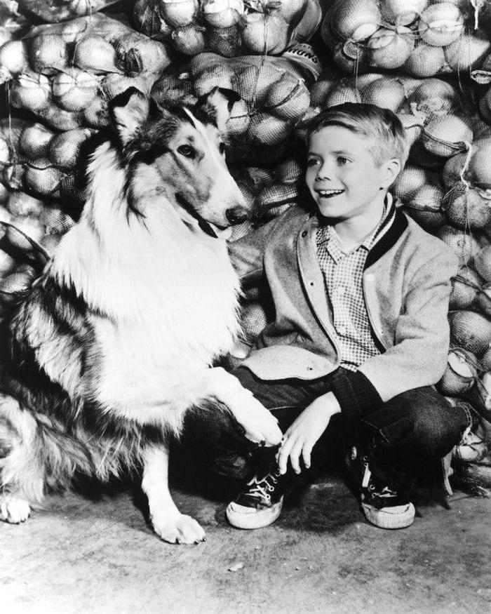 """""""Lassie"""""""