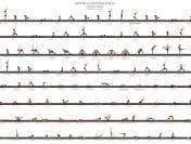Brief About Ashtanga Vinyasa Yoga Primary Series