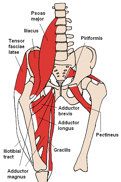 psoas bosy muscle