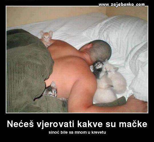 kad spavaš s mačkama