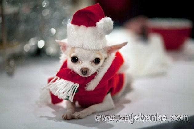 životinje slave Božić