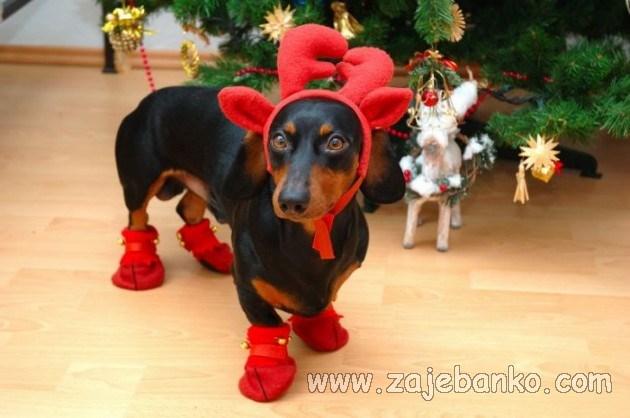 životinje u božićnom ruhu