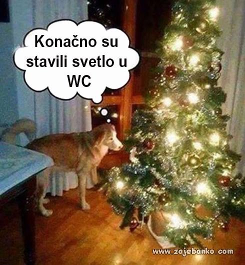 pas zapišava božićno drvce