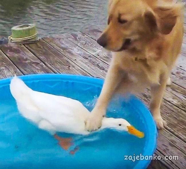 životinje imaju loš dan