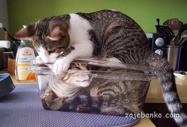 mačka se ponaša kao kreten