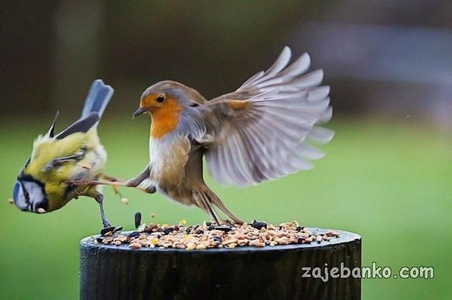 zločeste ptice kreteni