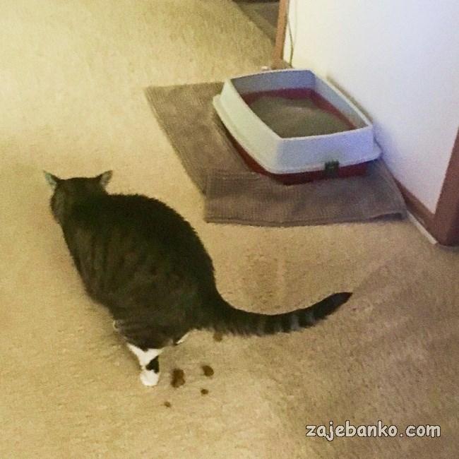 mačka vrši nuždu po kući
