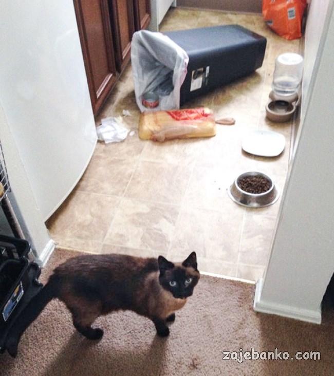 mačka pravi nered po kući
