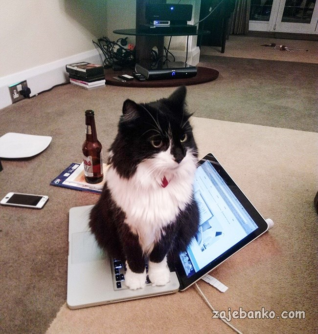 mačka sjedi na laptopu