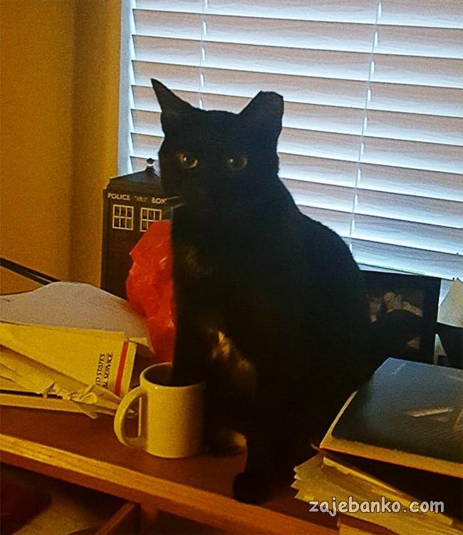 crna mačka smiješna slika