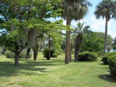 Park of the Palms