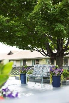 Maple View Terrace