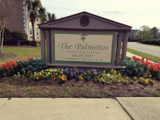 The Palmettos of Charleston