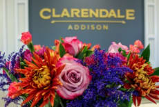 Clarendale of Addison