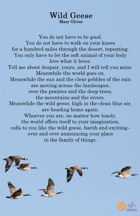 Poem: Wild Geese by Mary Oliver