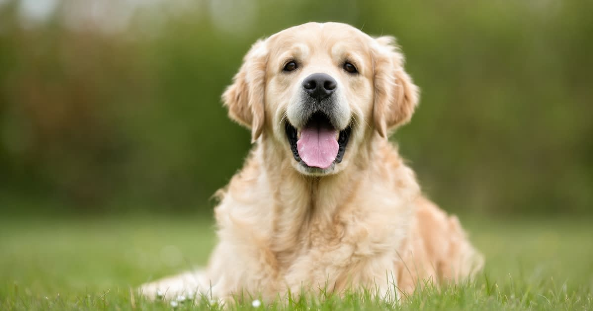 When Aging Parents Can No Longer Care for Pets