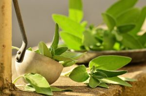 sage-cooking herb