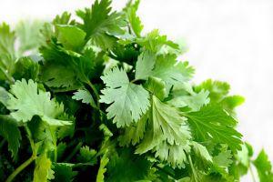 cilantro-cooking herb