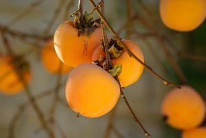 Japani Phal-rare indian fruit