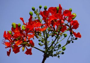 golmuhar-monsoon plant