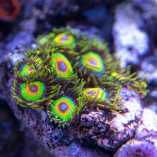 Rastas are one of my favorite zoas. Just look at that green!