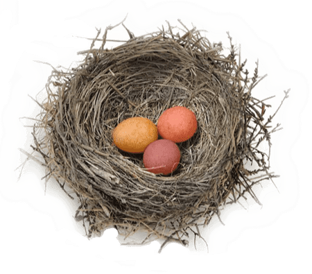 nest-with-eggs