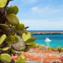 Study Abroad Reviews for AIFS: Galapagos Islands – Environmental Sciences Study Abroad, January Term