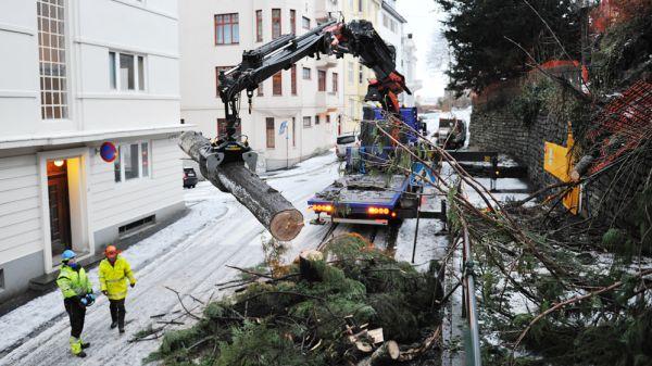 Illus. Har du trær som skaper bekymring?