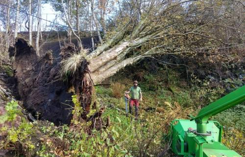 Illus: Trefelling og skogrydding i Bergen