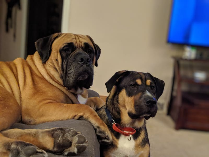 samson and guinness