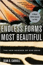 Book Cover for Endless Forms Most Beautiful