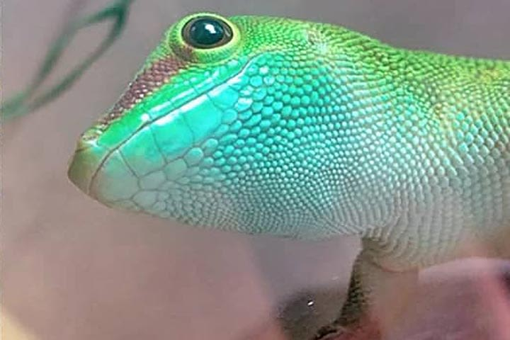 Reptile Encounter for Two at Ark Wildlife Park