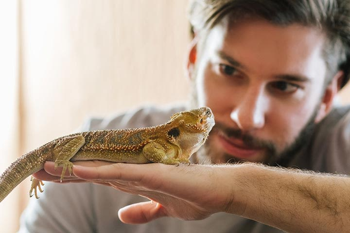 Reptile Encounter for One at Ark Wildlife Park