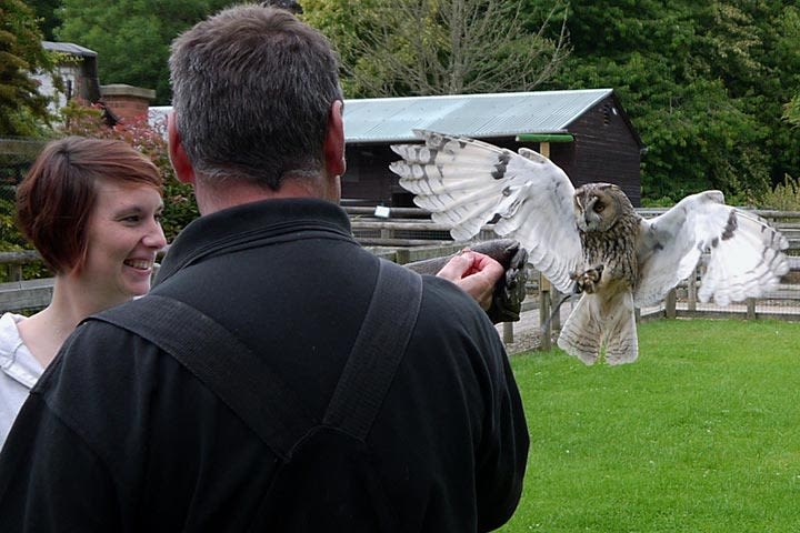 Hawksflight Falconry Birds of Prey Experience