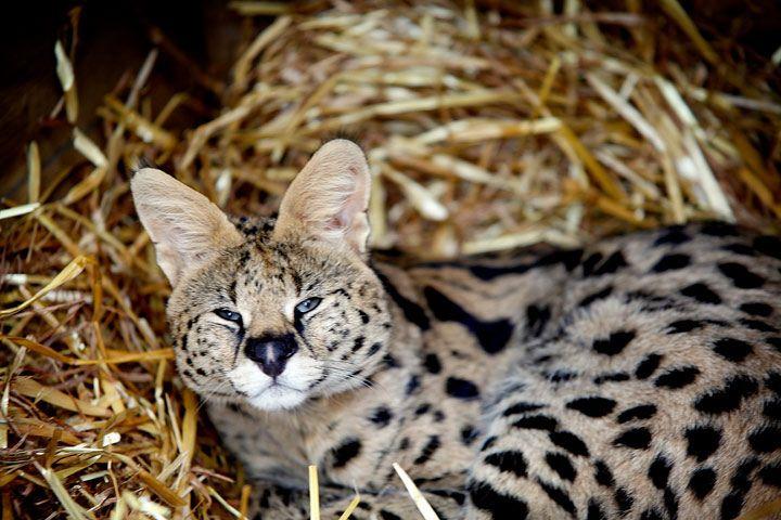 Animal Encounters & Experiences