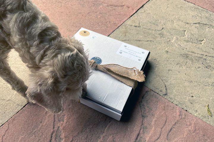 3 Month Dog Treat Subscription