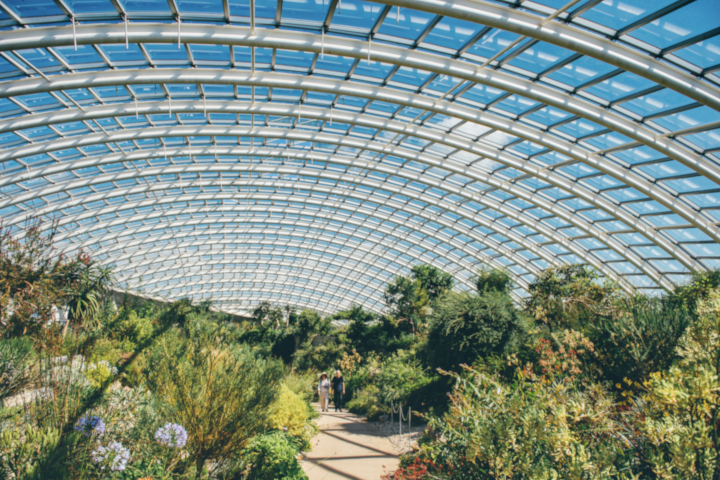 Afternoon Welsh Tea with Prosecco in The Iconic Great Glasshouse for Two
