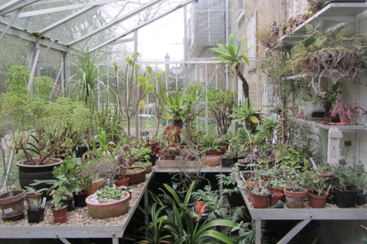South London Botanical Institute with a Cream Tea and Private Tour for 2