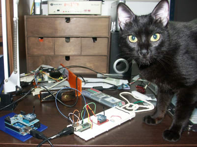 A guilty-looking black cat looks at the camera, an in-use breadboard and other electronics near their paws