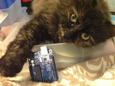 A tortiseshell cat reaches out from a plastic tub over a circuit board