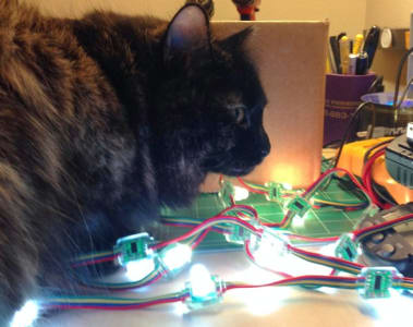 A long haired black cat perched over a strand of white LEDs