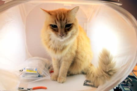 orange and white cat sitting in illuminated white chair surrounded by various electronic components and pliers