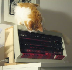 orange and white cat sitting on top of PDP-11/70 panel looking downward at machine