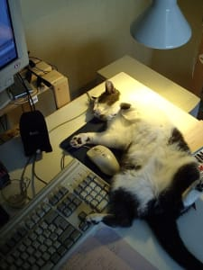 grey and white cat sleeping on their back on top of a mousepad next to computer mouse and keyboard